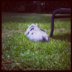 Daisy sunbathes