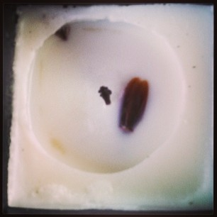 roach crawled into the candle wax when it was hot. then died. dumbass.