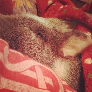 not gonna lie, #pigsnuggle is awesome
