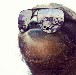 Cash Money Sloth