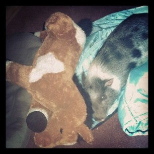 snugglin' with her pony. because of course. #pigstagram