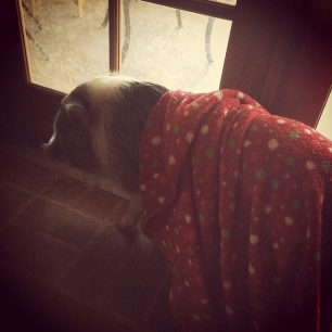 someone didn't wanna let go of their blankey #pigstagram