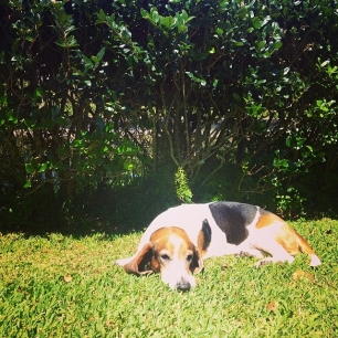 Barnaby: the sunbasset