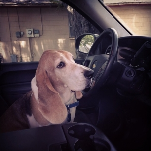 don't worry person, I'll drive.